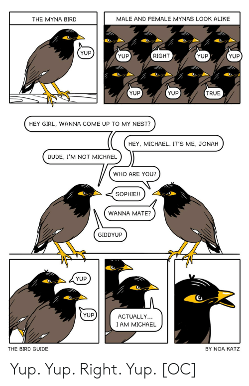 mate: MALE AND FEMALE MYNAS LOOK ALIKE  THE MYNA BIRD  YUP  YUP  YUP  RIGHT  YUP  YUP  YUP  TRUE  HEY GIRL, WANNA COME UP TO MY NEST?  HEY, MICHAEL. IT'S ME, JONAH  DUDE, I'M NOT MICHAEL  WHO ARE YOU?  SOPHIE!!  WANNA MATE?  GIDDYUP  YUP  YUP  ACTUALLY...  I AM MICHAEL  THE BIRD GUIDE  BY NOA KATZ Yup. Yup. Right. Yup. [OC]