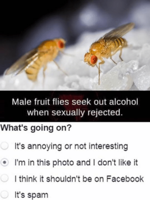 i dont like it: Male fruit flies seek out alcohol  when sexually rejected.  What's going on?  It's annoying or not interesting  I'm in this photo and I don't like it  l think it shouldn't be on Facebook  It's spam