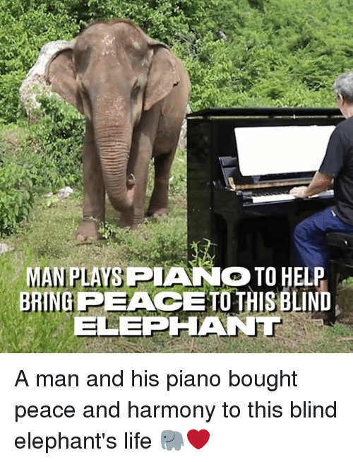 Dank, Life, and Elephant: MAN PLAYS PIANO TO HELP  BRING PEACETO THIS BLIND  ELEPHANT A man and his piano bought peace and harmony to this blind elephant's life 🐘❤️