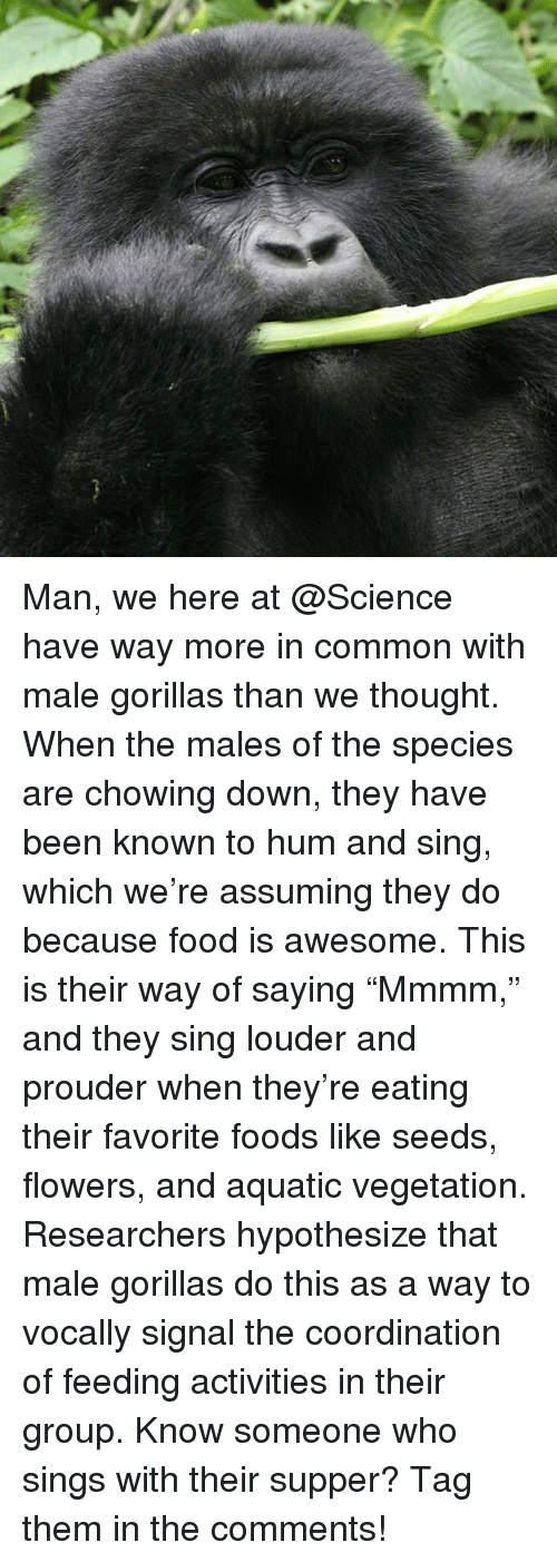 "Vegetals: Man, we here at @Science have way more in common with male gorillas than we thought. When the males of the species are chowing down, they have been known to hum and sing, which we're assuming they do because food is awesome. This is their way of saying ""Mmmm,"" and they sing louder and prouder when they're eating their favorite foods like seeds, flowers, and aquatic vegetation. Researchers hypothesize that male gorillas do this as a way to vocally signal the coordination of feeding activities in their group. Know someone who sings with their supper? Tag them in the comments!"