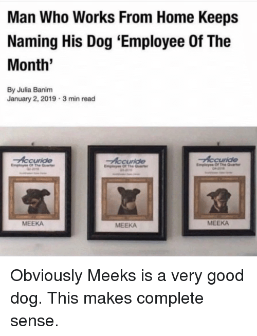 Memes, Good, and Home: Man Who Works From Home Keeps  Naming His Dog 'Employee Of The  Month'  By Julia Banim  January 2, 2019  3 min read  Accuride  Accuride  MEEKA  MEEKA  MEEKA Obviously Meeks is a very good dog. This makes complete sense.