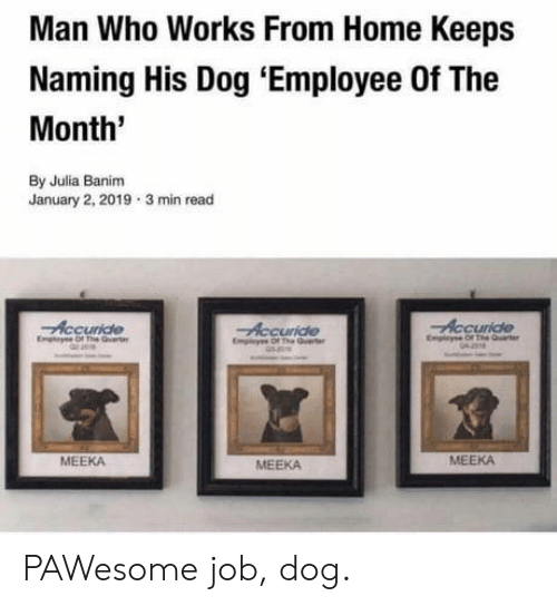 Home, Dog, and Job: Man Who Works From Home Keeps  Naming His Dog 'Employee Of The  Month'  By Julia Banim  January 2, 2019 3 min read  Accuride  Empicyse Of The Quaer  Accuride  Eny Of The  Accuride  Emiyes Of The arte  জ  MEEKA  MEEKA  MEEKA PAWesome job, dog.
