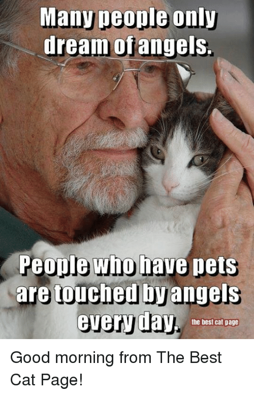 Memes, Good Morning, and Angels: Many people only  dream ofangels.  People who have pets  are touched by  angels  everyday.  the best cat page Good morning from The Best Cat Page!
