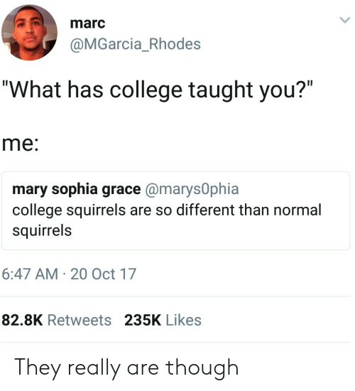 """rhodes: marc  @MGarcia_Rhodes  """"What has college taught you?""""  me:  mary sophia grace@marys0phia  college squirrels are so different than normal  squirrels  6:47 AM 20 Oct 17  82.8K Retweets 235K Likes They really are though"""