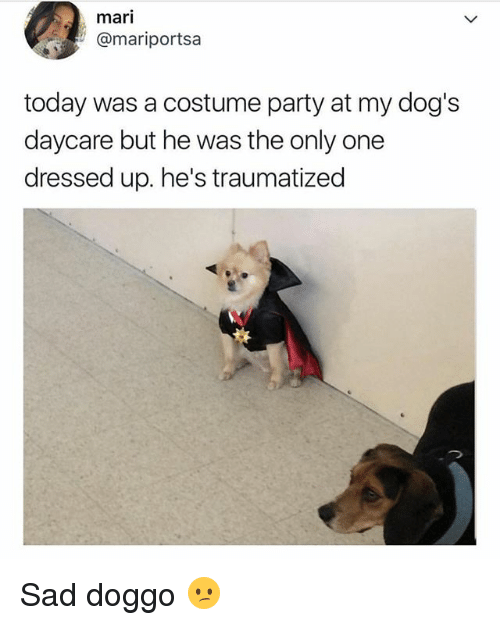 Dogs, Memes, and Party: mari  @mariportsa  today was a costume party at my dog's  daycare but he was the only one  dressed up. he's traumatized Sad doggo 😕