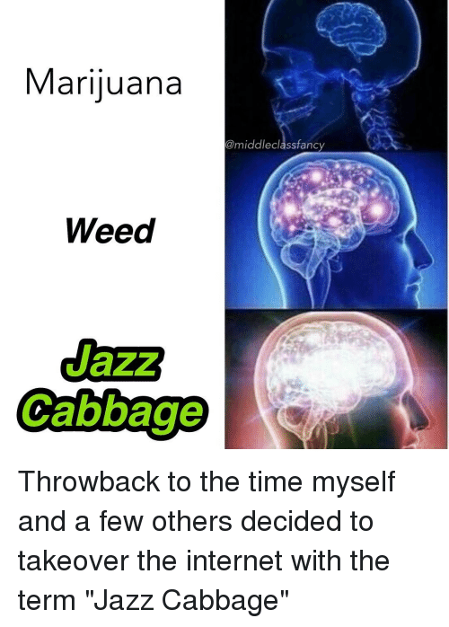 """fanciness: Marijuana  @middle class fancy  Weed  Cabbage Throwback to the time myself and a few others decided to takeover the internet with the term """"Jazz Cabbage"""""""
