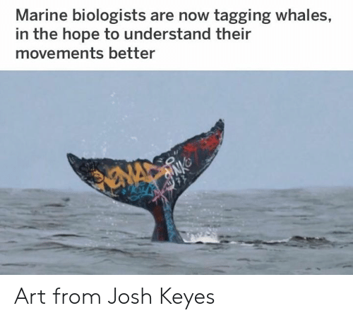 Dank, Hope, and 🤖: Marine biologists are now tagging whales,  in the hope to understand their  movements better Art from Josh Keyes