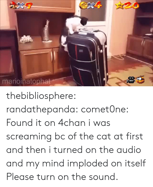 4chan, Tumblr, and Blog: marioinatopha thebibliosphere: randathepanda:  comet0ne: Found it on 4chan  i was screaming bc of the cat at first and then i turned on the audio and my mind imploded on itself   Please turn on the sound.