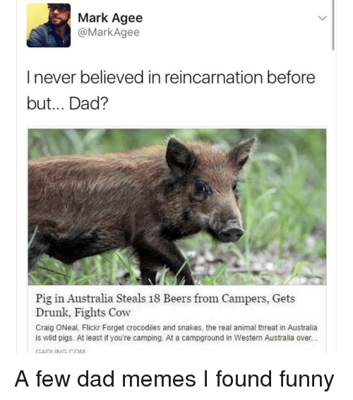 Dad, Drunk, and Funny: Mark Agee  @MarkAgee  I never believed in reincarnation before  but... Dad?  Pig in Australia Steals 18 Beers from Campers, Gets  Drunk, Fights Cow  Craig ONeal, Flickr Forget crocodiles and snakes, the real animal threat in Australia  is wild pigs. At least if you're camping. At a campground in Western Australia over..  GADLING COM A few dad memes I found funny