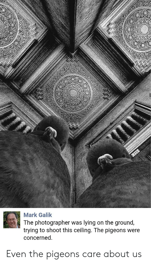 About Us: Mark Galik  The photographer was lying on the ground,  trying to shoot this ceiling. The pigeons were  concerned Even the pigeons care about us