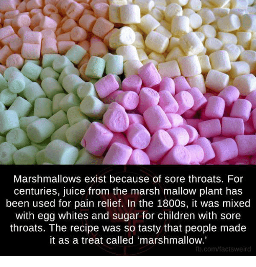 So Tasty: Marshmallows exist because of sore throats. For  centuries, juice from the marsh mallow plant has  been used for pain relief. In the 1800s, it was mixed  with egg whites and sugar for children with sore  throats. The recipe was so tasty that people made  it as a treat called 'marshmallow.'  fb.com/factsweird