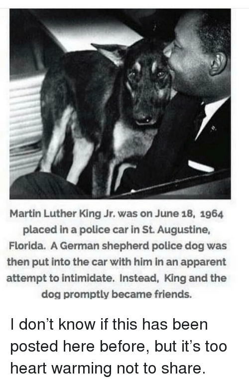 intimidate: Martin Luther King Jr. was on June 18, 1964  placed in a police car in St. Augustine,  Florida. A German shepherd police dog was  then put into the car with him in an apparent  attempt to intimidate. Instead, King and the  dog promptly became friends. I don't know if this has been posted here before, but it's too heart warming not to share.