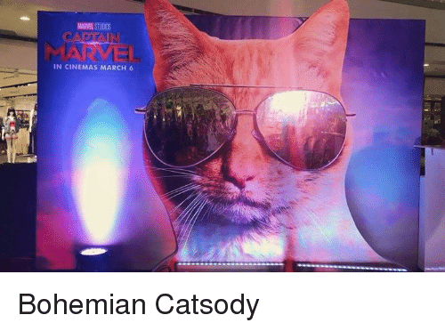 Dank, Marvel, and Bohemian: MARVEL STUODS  IN CINEMAS MARCH 6 Bohemian Catsody