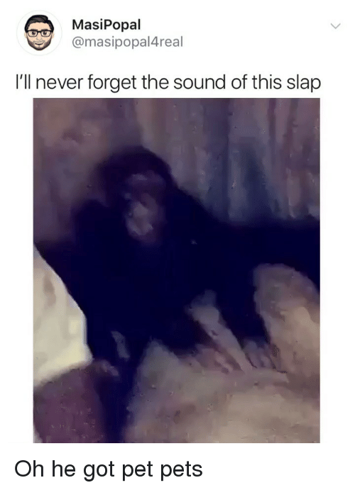 Funny, Pets, and Never: MasiPopal  @masipopal4real  I'll never forget the sound of this slap Oh he got pet pets