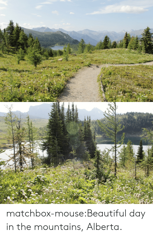 Mouse: matchbox-mouse:Beautiful day in the mountains, Alberta.