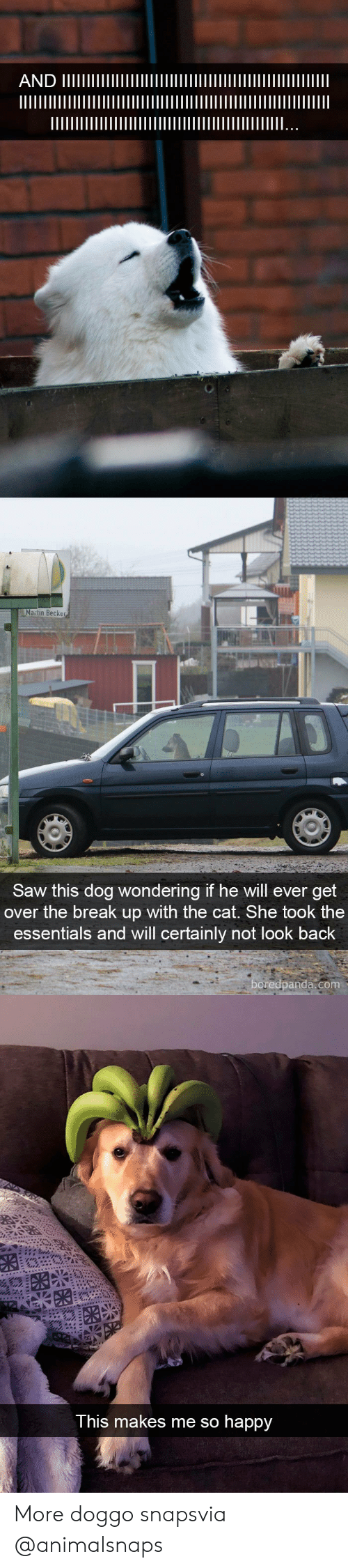 Certainly Not: Matin Becker  Saw this dog wondering if he will ever get  over the break up with the cat. She took the  essentials and will certainly not look back  oredpanda.com   This makes me so happy More doggo snapsvia @animalsnaps