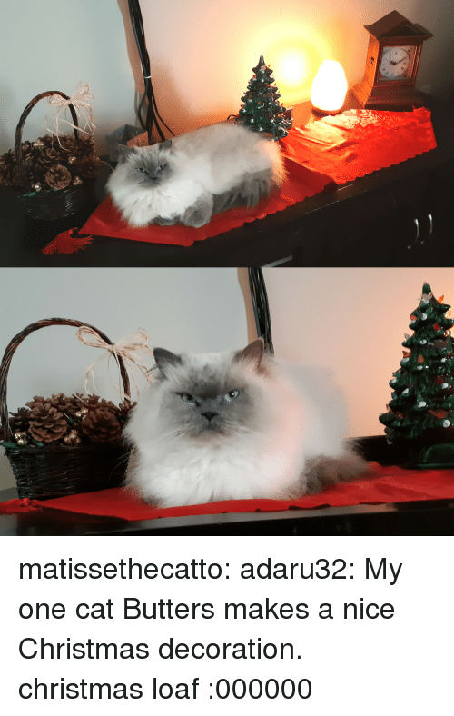 Christmas, Tumblr, and Blog: matissethecatto:  adaru32:  My one cat Butters makes a nice Christmas decoration.  christmas loaf  :000000