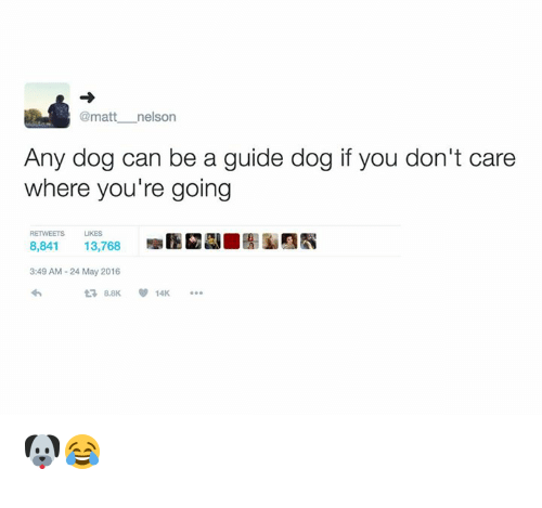 Dog, Can, and May: @matt nelson  Any dog can be a guide dog if you don't care  where you're going  RETWEETS  LIKES  8,841  13,768  3:49 AM-24 May 2016  t3 8.8K  14K