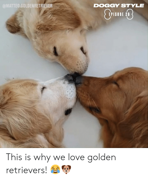 doggy: @MATTEO.GOLDENRETRIEVER  DOGGY STYLE  EPISODE 28 This is why we love golden retrievers! 😂🐶