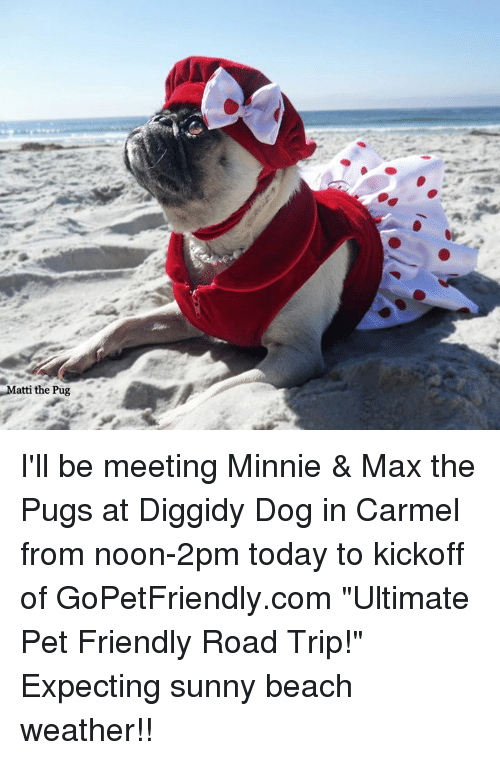 "sunnies: Matti the Pug I'll be meeting Minnie & Max the Pugs at Diggidy Dog in Carmel from noon-2pm today to kickoff of GoPetFriendly.com ""Ultimate Pet Friendly Road Trip!""  Expecting sunny beach weather!!"