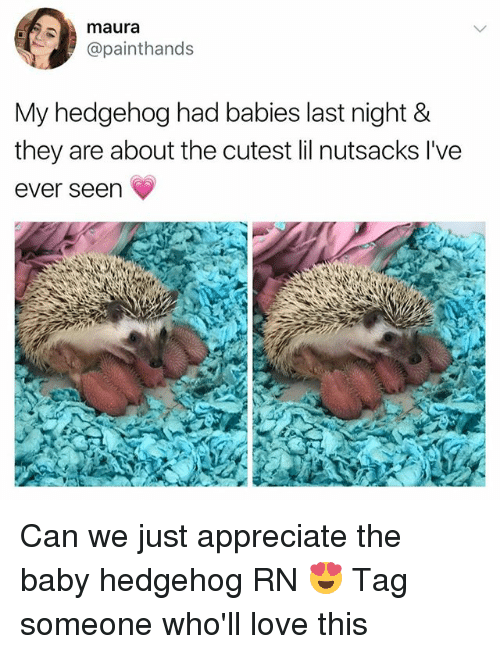 Love, Appreciate, and Girl: maura  @painthands  My hedgehog had babies last night &  they are about the cutest lil nutsacks l've  ever seen Can we just appreciate the baby hedgehog RN 😍 Tag someone who'll love this