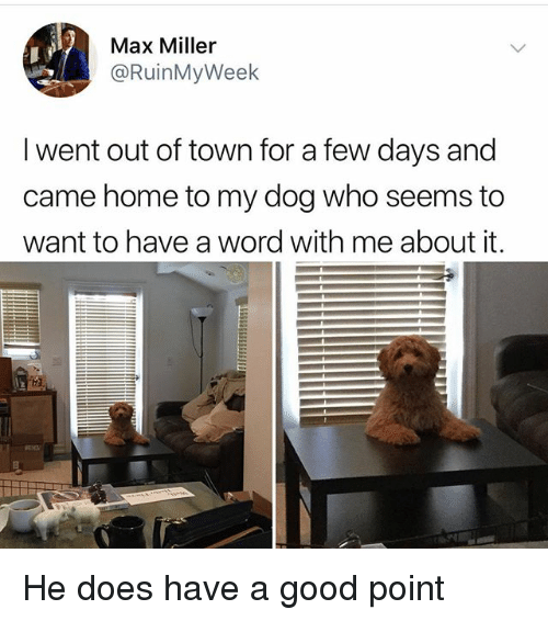 Memes, Good, and Home: Max Miller  @RuinMyWeek  I went out of town for a few days and  came home to my dog who seems to  want to have a word with me about it. He does have a good point
