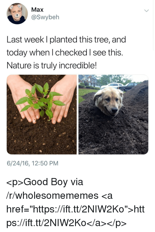 """Good, Nature, and Today: Max  @Swybeh  Last week I planted this tree, and  today when l checked I see this.  Nature is truly incredible!  6/24/16, 12:50 PM <p>Good Boy via /r/wholesomememes <a href=""""https://ift.tt/2NIW2Ko"""">https://ift.tt/2NIW2Ko</a></p>"""