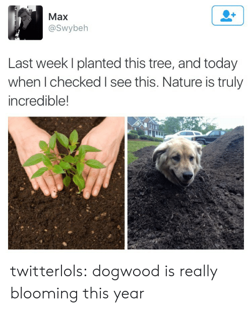 Nature Is: Max  @Swybeh  Last week I planted this tree, and today  when I checked I see this. Nature is truly  incredible! twitterlols: dogwood is really blooming this year