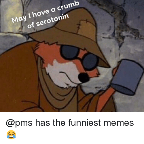 funniest memes: May I have a crumb  of serotonin @pms has the funniest memes 😂
