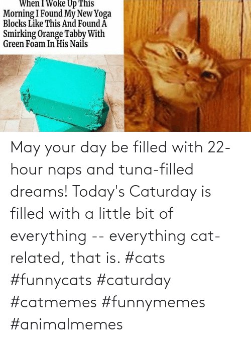 Naps: May your day be filled with 22-hour naps and tuna-filled dreams! Today's Caturday is filled with a little bit of everything -- everything cat-related, that is. #cats #funnycats #caturday #catmemes #funnymemes #animalmemes