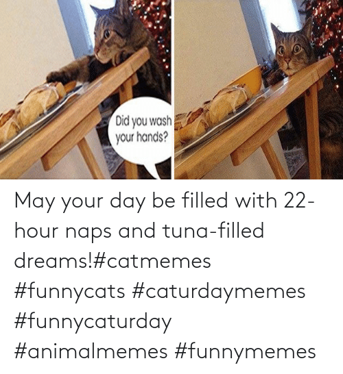 With: May your day be filled with 22-hour naps and tuna-filled dreams!#catmemes #funnycats #caturdaymemes #funnycaturday #animalmemes #funnymemes