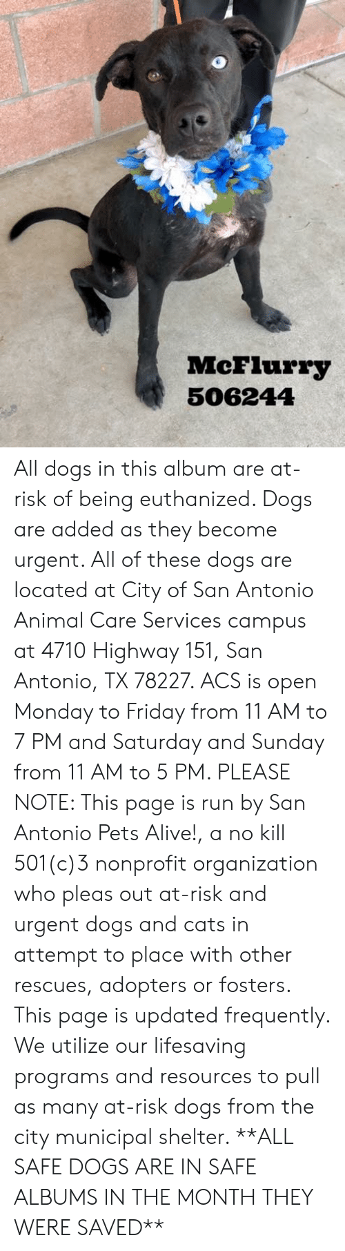 Alive, Cats, and Dogs: McFlurry  506244 All dogs in this album are at-risk of being euthanized.  Dogs are added as they become urgent.  All of these dogs are located at City of San Antonio Animal Care Services campus at 4710 Highway 151, San Antonio, TX 78227. ACS is open Monday to Friday from 11 AM to 7 PM and Saturday and Sunday from 11 AM to 5 PM.   PLEASE NOTE: This page is run by San Antonio Pets Alive!, a no kill 501(c)3 nonprofit organization who pleas out at-risk and urgent dogs and cats in attempt to place with other rescues, adopters or fosters.   This page is updated frequently.  We utilize our lifesaving programs and resources to pull as many at-risk dogs from the city municipal shelter. **ALL SAFE DOGS ARE IN SAFE ALBUMS IN THE MONTH THEY WERE SAVED**