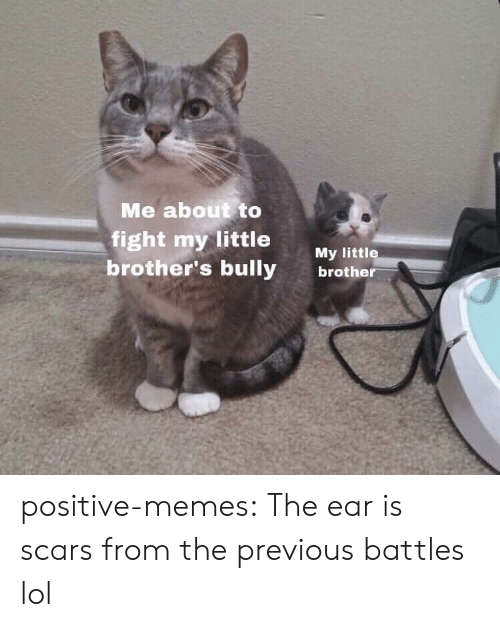 Lol, Memes, and Tumblr: Me about to  fight my little My ltt  brother's bully brothe positive-memes:  The ear is scars from the previous battles lol