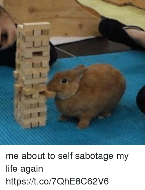 Me About To Self Sabotage My Life Again Httpstco7qhe8c62v6 Funny