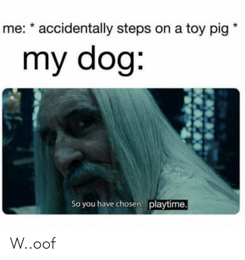 accidentally: me: * accidentally steps on a toy pig  my dog:  So you have chosen. playtime. W..oof