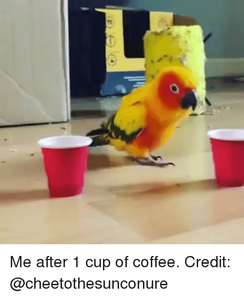 Memes, Coffee, and 🤖: Me after 1 cup of coffee. Credit: @cheetothesunconure