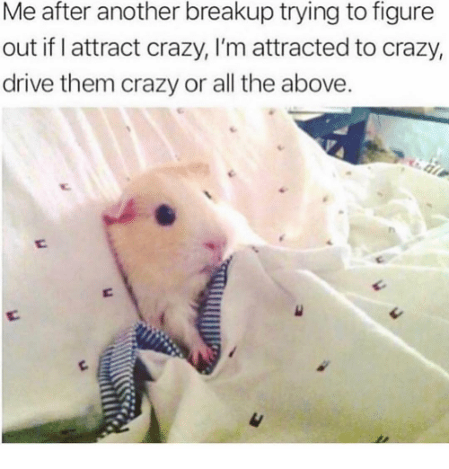 Crazy, Drive, and Girl Memes: Me after another breakup trying to figure  out if I attract crazy, I'm attracted to crazy,  drive them crazy or all the above