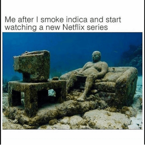 Funny, Netflix, and New: Me after I smoke indica and start  watching a new Netflix series