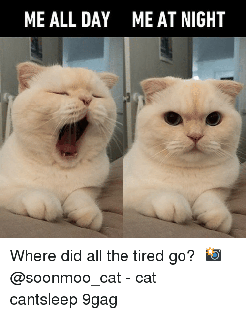 9gag, Memes, and All The: ME ALL DAY  ME AT NIGHT Where did all the tired go?⠀ 📸 @soonmoo_cat⠀ -⠀ cat cantsleep 9gag