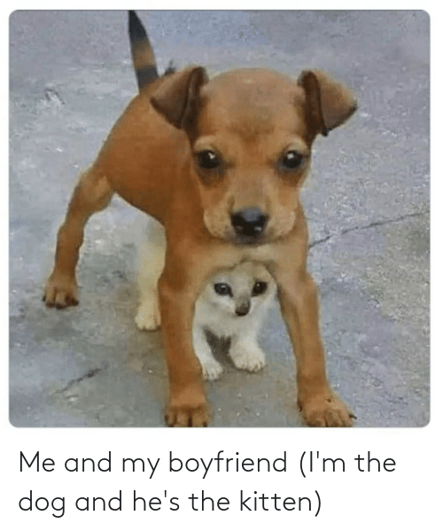 Aww Memes: Me and my boyfriend (I'm the dog and he's the kitten)