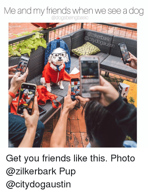 Friends, Memes, and Pup: Me and my friends when we see a dog  @dogsbeingbasic  zikerbar  Citydo  austin Get you friends like this. Photo @zilkerbark Pup @citydogaustin
