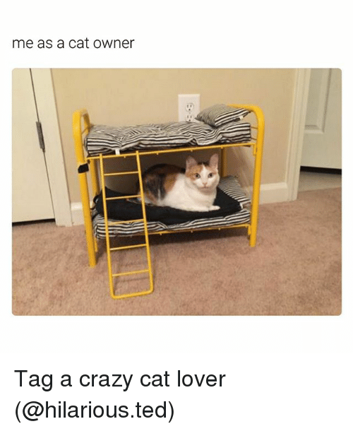 cat lover: me as a cat Owner Tag a crazy cat lover (@hilarious.ted)