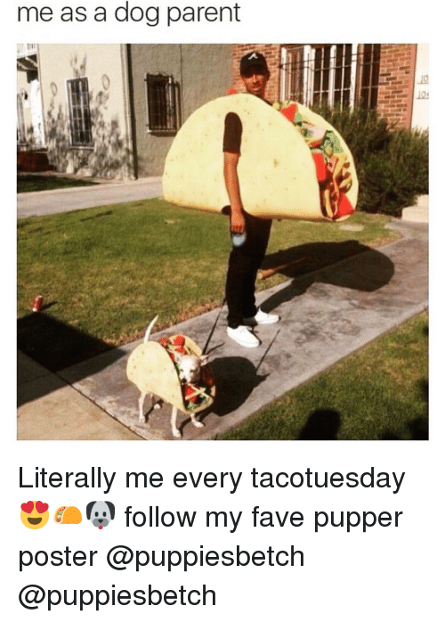 Funny, Fave, and Dog: me as a dog parent  10 Literally me every tacotuesday 😍🌮🐶 follow my fave pupper poster @puppiesbetch @puppiesbetch