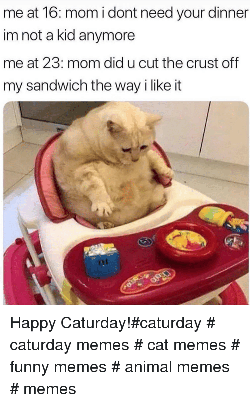 Cat Memes Funny: me at 16: mom i dont need your dinner  im not a kid anymore  me at 23: mom did u cut the crust off  my sandwich the way i like it Happy Caturday!#caturday # caturday memes # cat memes # funny memes # animal memes # memes