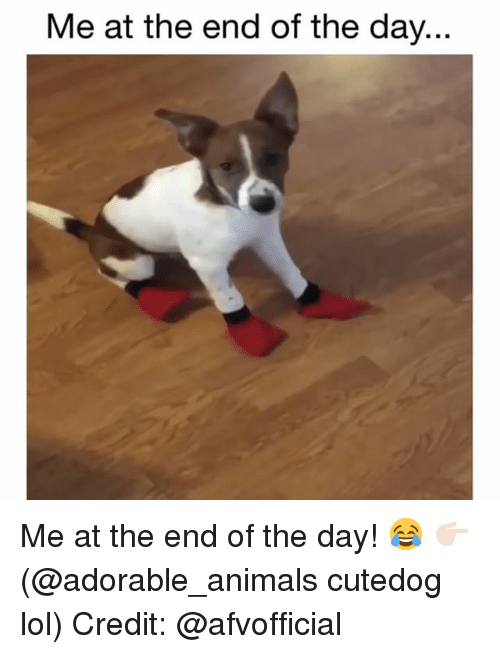 Animals, Lol, and Memes: Me at the end of the day... Me at the end of the day! 😂 👉🏻(@adorable_animals cutedog lol) Credit: @afvofficial