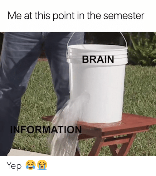 Brain, Information, and This: Me at this point in the semester  BRAIN  INFORMATION Yep 😂😭