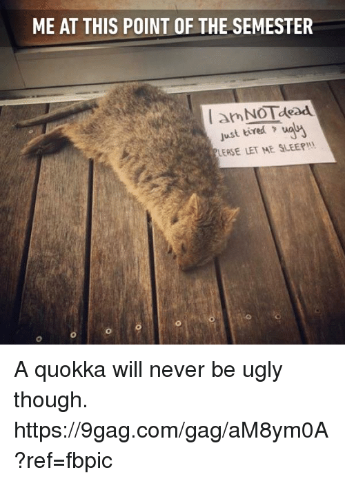 sleepys: ME AT THIS POINT OF THE SEMESTER  Just tired waNA  LEASE LET ME SLEEPI A quokka will never be ugly though. https://9gag.com/gag/aM8ym0A?ref=fbpic
