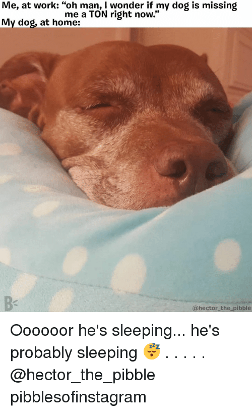 "Memes, Work, and Home: Me, at work: ""oh man, I wonder if my dog is missing  My dog, at home:  me a TON right now.""  @hector_the pibble Oooooor he's sleeping... he's probably sleeping 😴 . . . . . @hector_the_pibble pibblesofinstagram"