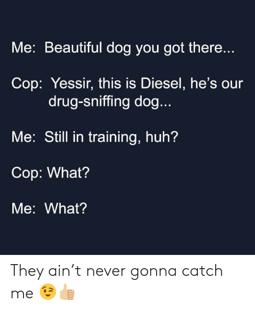 Sniffing: Me: Beautiful dog you got there...  Cop: Yessir, this is Diesel, he's our  drug-sniffing dog...  Me: Still in training, huh?  Cop: What?  Me: What? They ain't never gonna catch me 😉👍🏼