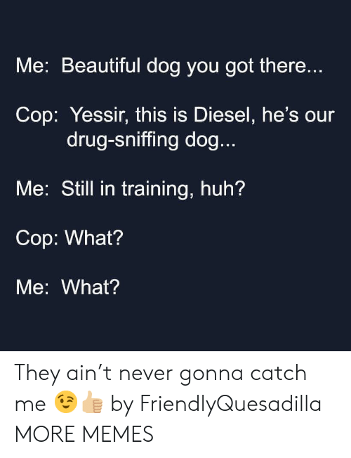 Sniffing: Me: Beautiful dog you got there...  Cop: Yessir, this is Diesel, he's our  drug-sniffing dog...  Me: Still in training, huh?  Cop: What?  Me: What? They ain't never gonna catch me 😉👍🏼 by FriendlyQuesadilla MORE MEMES